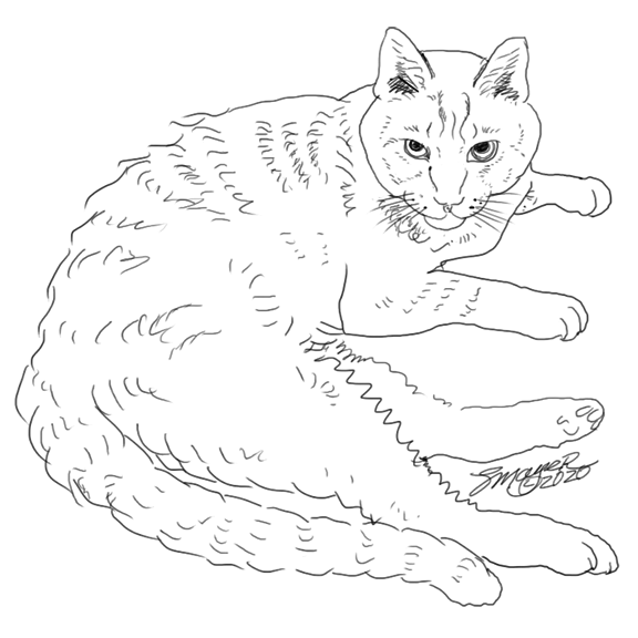 Awhitehorse Com Stacey S Coloring Books Tabby Cat To Color