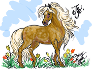 Jo Jo the Miniature Horse